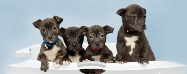 Wheatley, Whitney, Wembley & Waldo have all found homes!