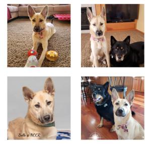 Belle  adopte 11-18