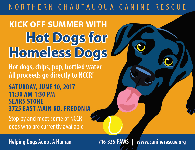 hotdogs for homeless dogs