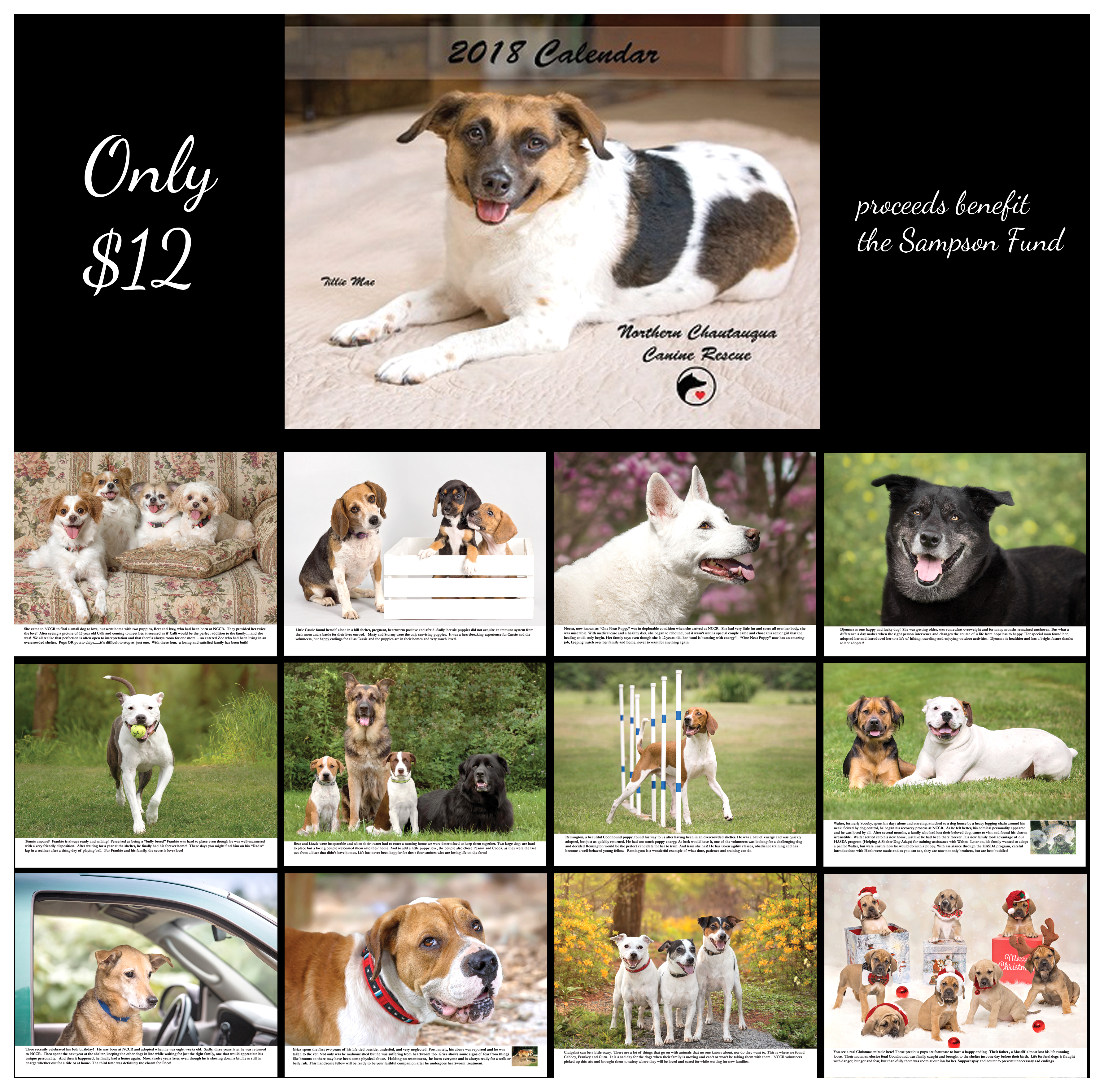 Calendar Category Ideas : Front page northern chautauqua canine rescue