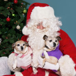 dolly pixie santa-s