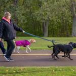 dog walk 4