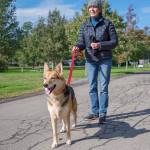 dog walk6