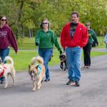 dog walk7
