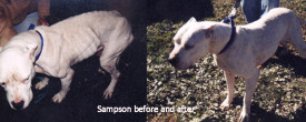Sampson: A Lasting Legacy