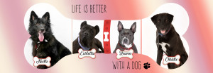 life is better banner