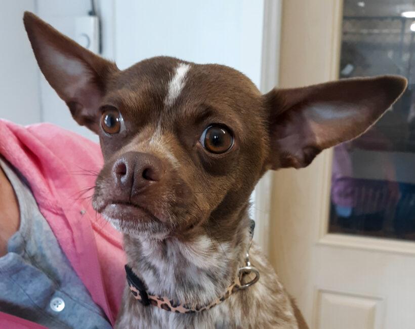 Brownie-Adopted!