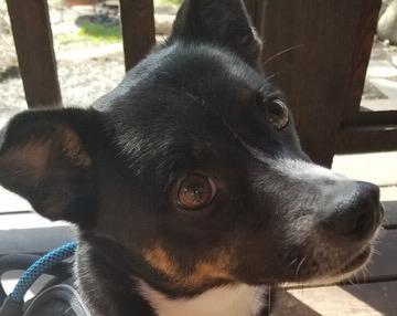 Jack-Adopted!