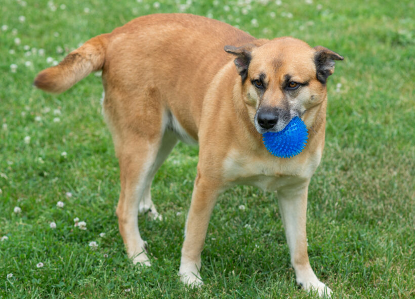 Mister Zeke – Adopted!