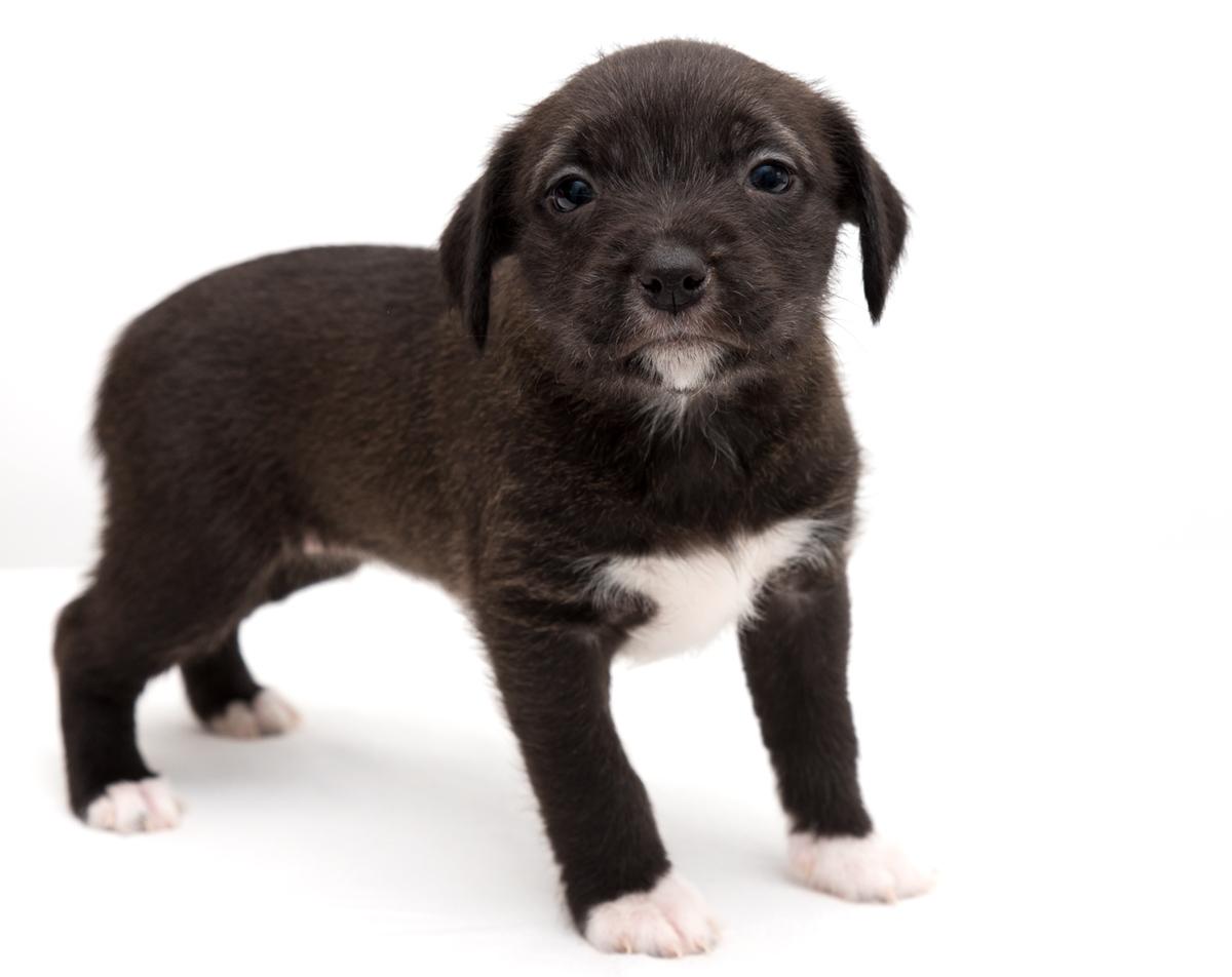 """G"" Puppies"