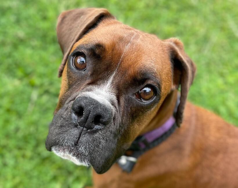 Hazel-Adopted!