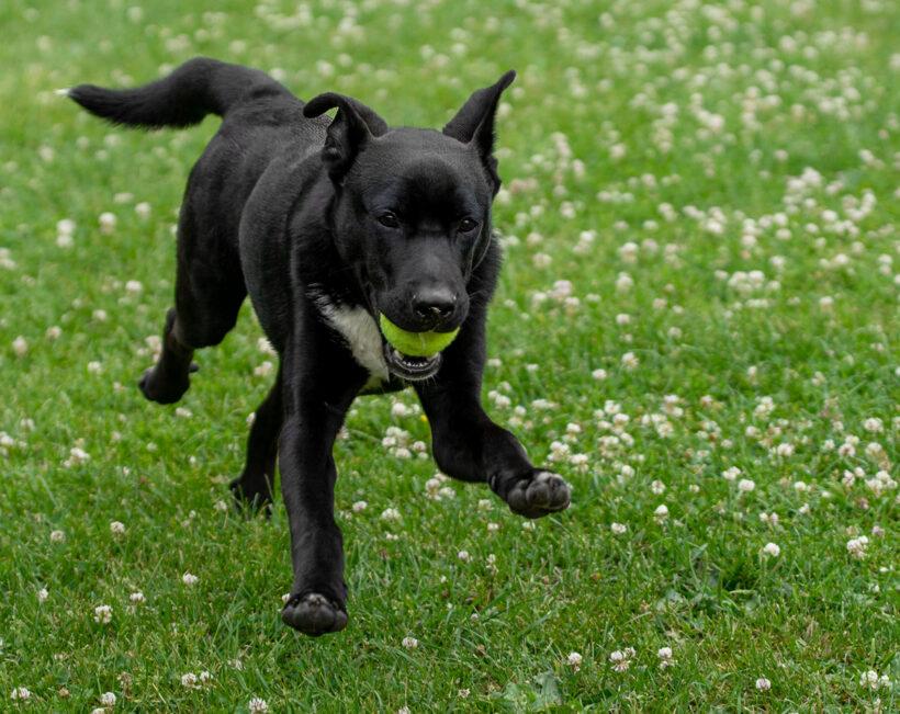 Onyx – Adopted!