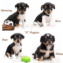 """H"" Puppies-Adopted!"