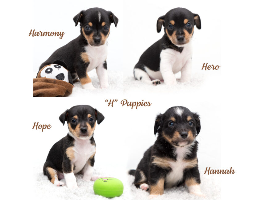 """""""H"""" Puppies-Adopted!"""