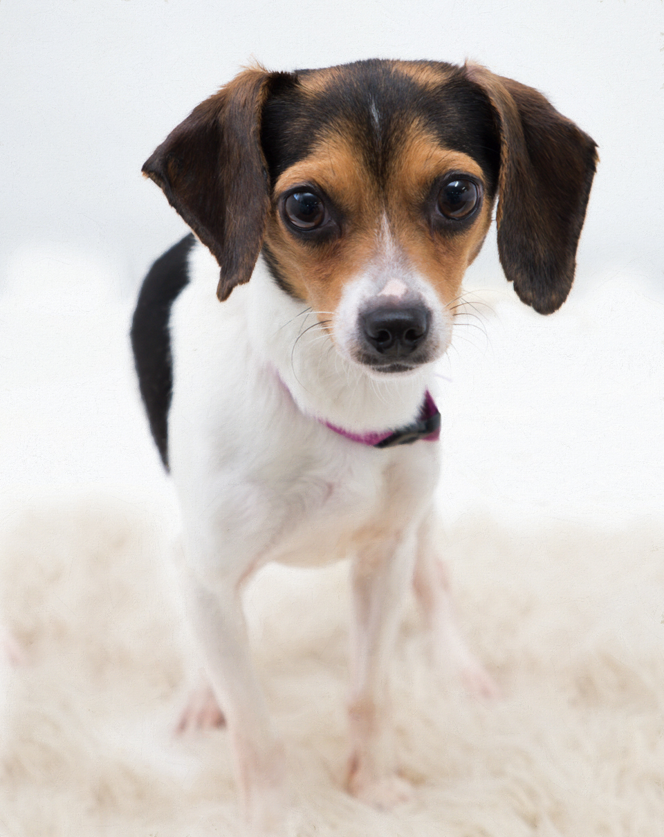 Bess – Adopted!