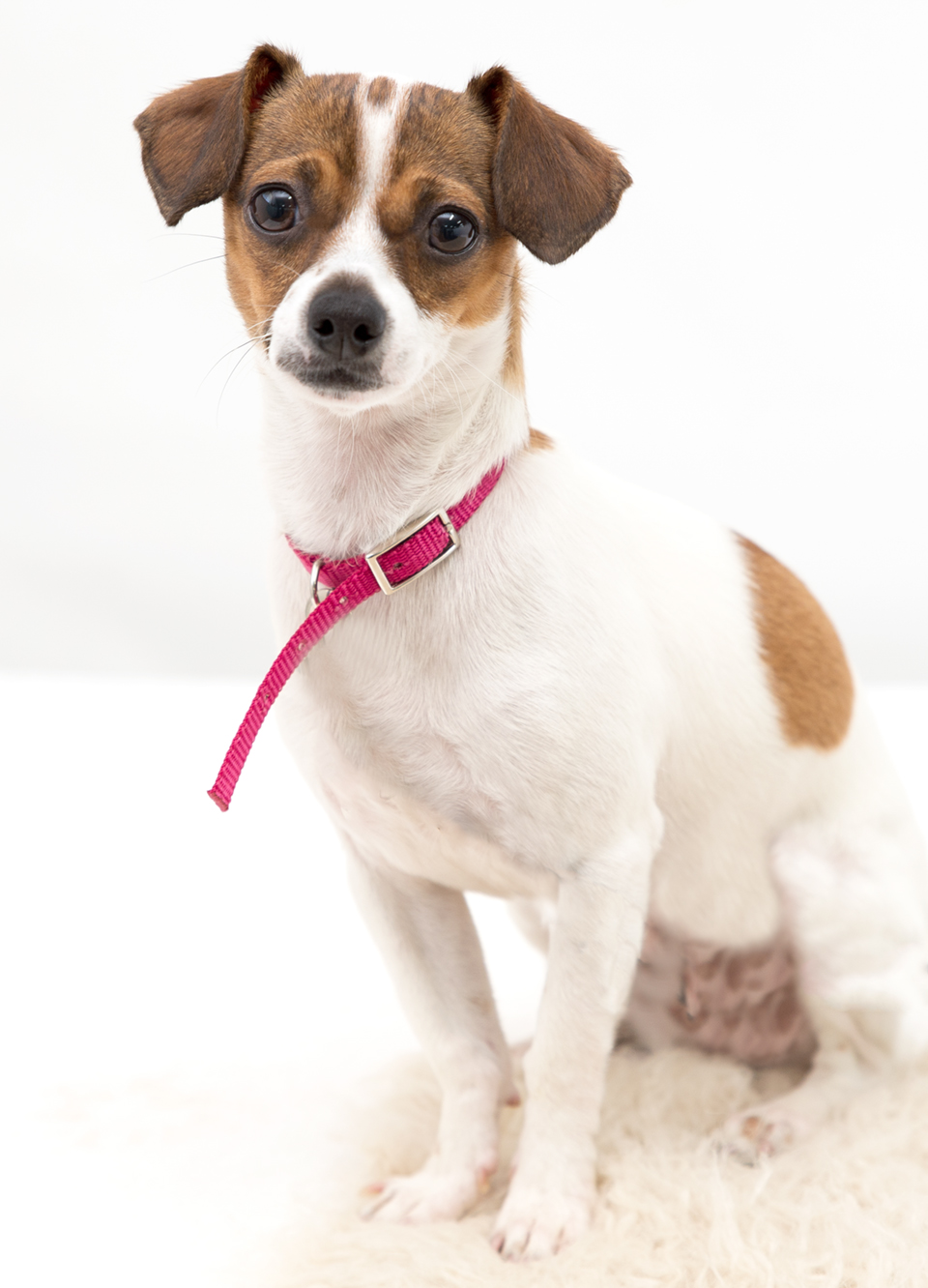 Brittany – Adopted!