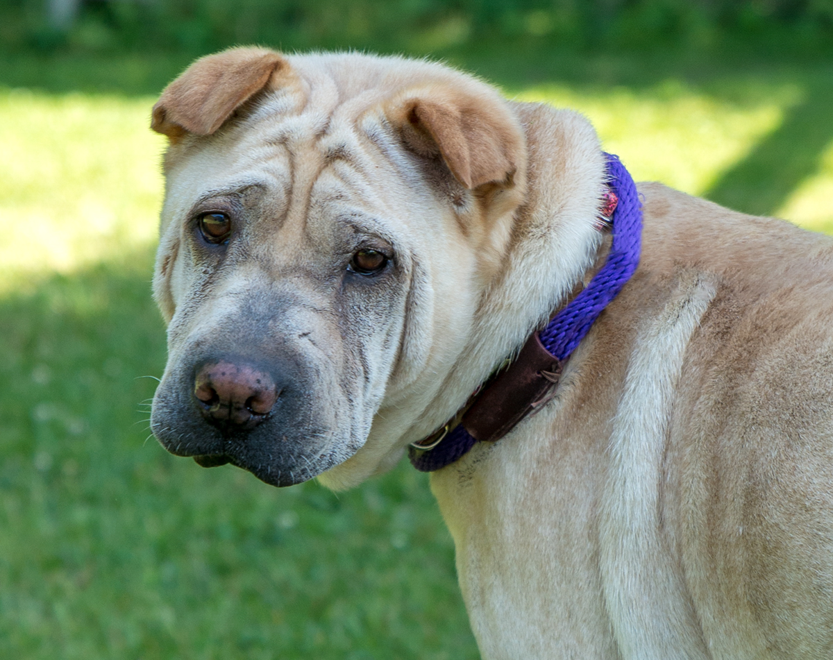 Charlotte – Adopted!