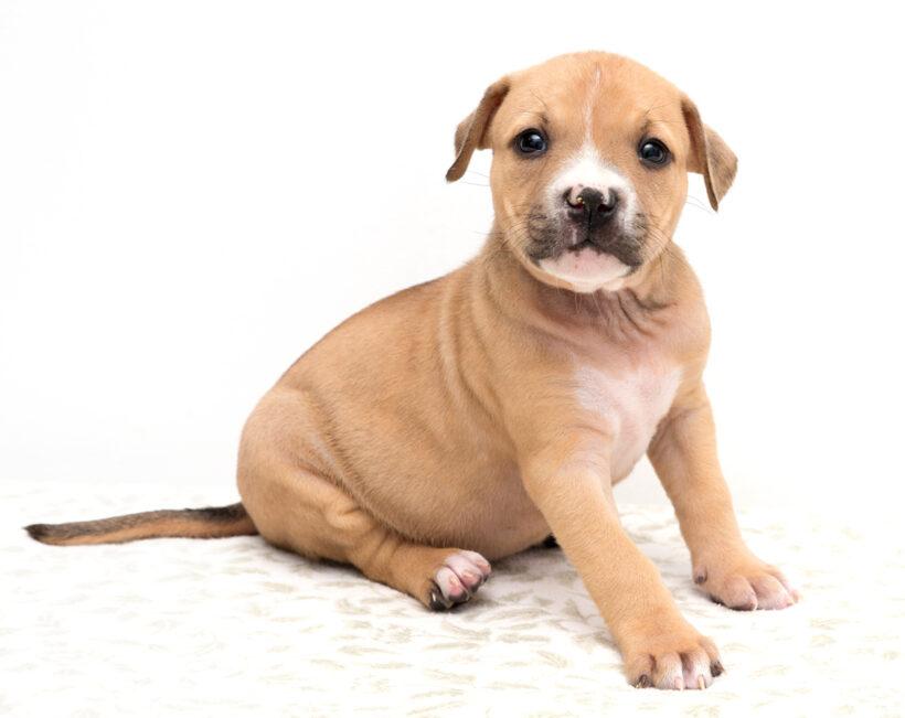"""K"" Pups-Adopted!"