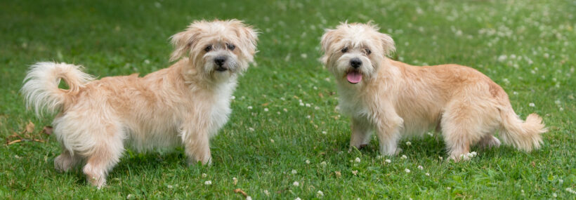 Lester and Linus-Adopted!