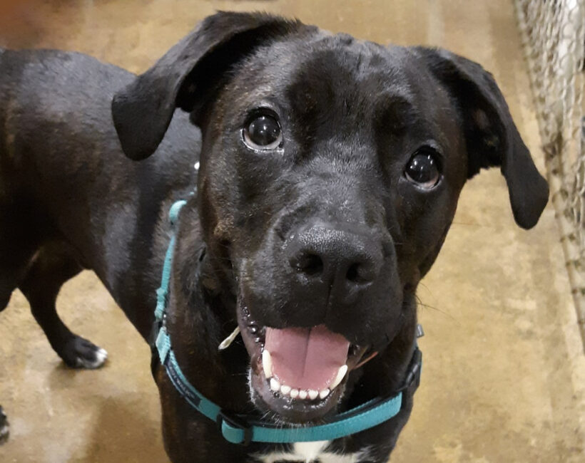 Peter Parker – Adopted!