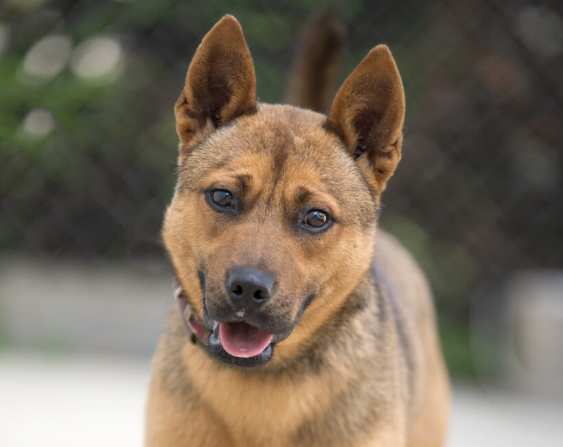 Sonny-Adopted!