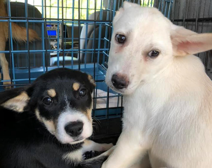 Jayden and Josie – Adopted