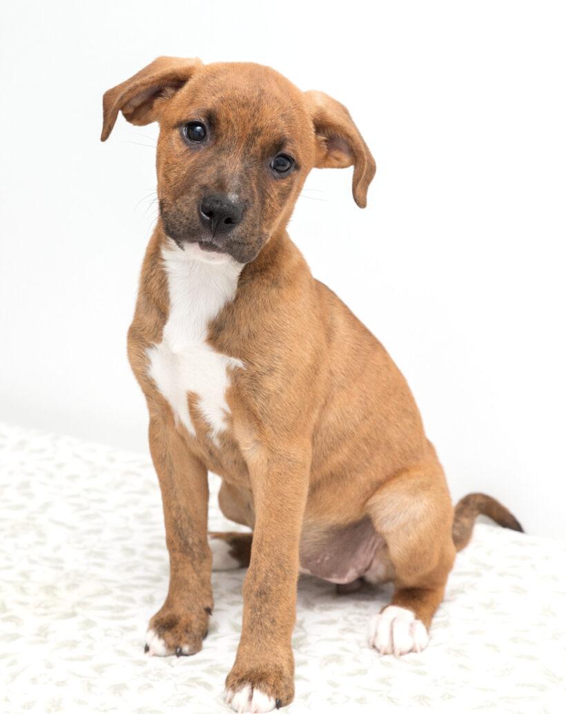 Marne-Adopted!