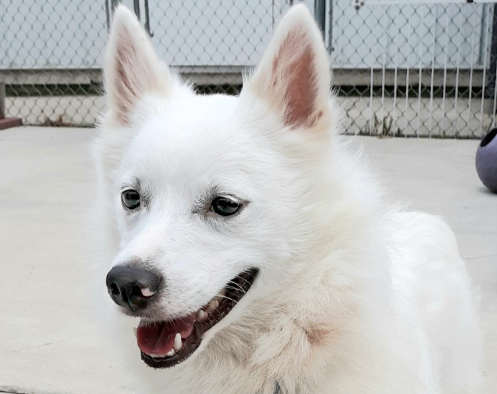 Milo-Adopted!
