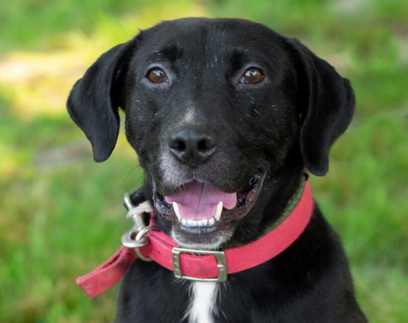Tank-Adopted!!