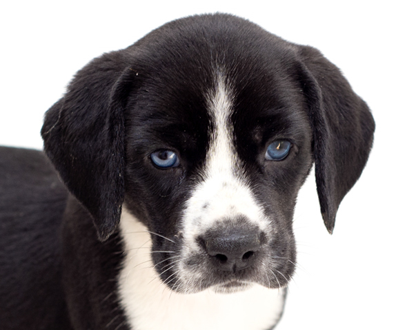 Quincie-Adopted!