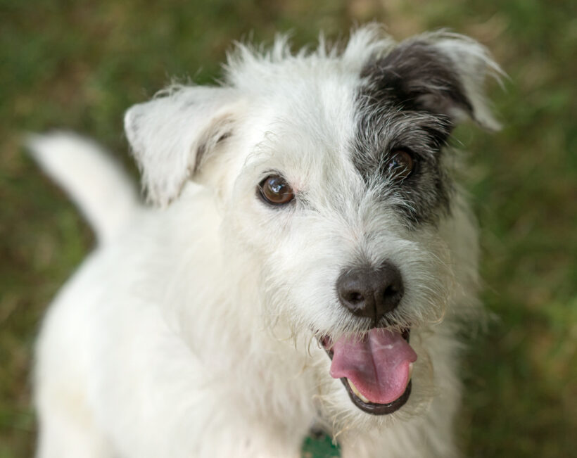 Buddy-Adopted!