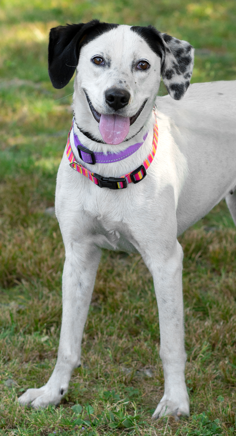 Dottie-Adopted!