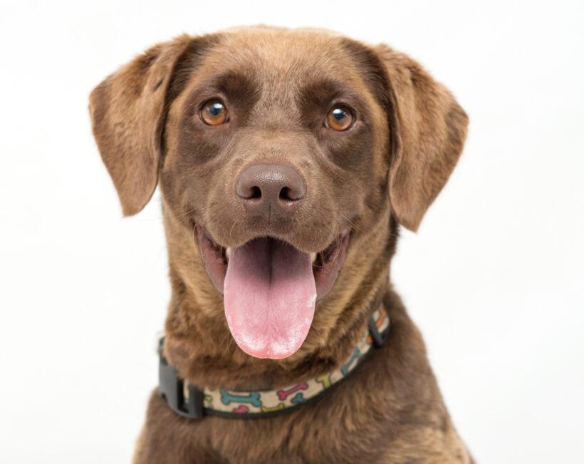 Emma-Adopted!