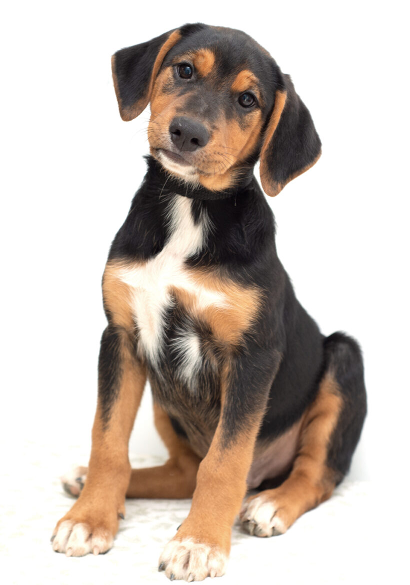 Preston-Adopted!