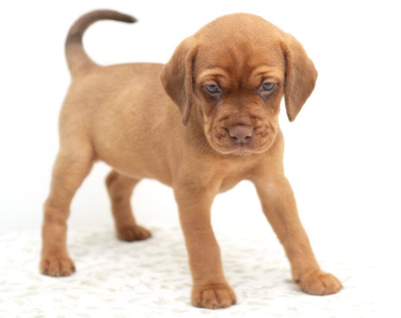 Quasi-Adopted!