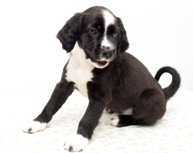 Quentin-Adopted!