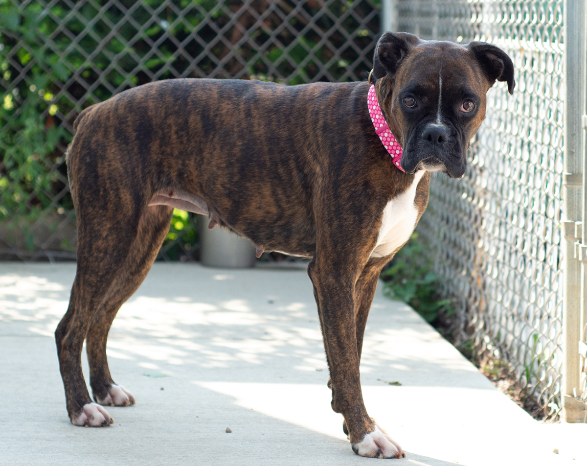 Abby-Adopted!