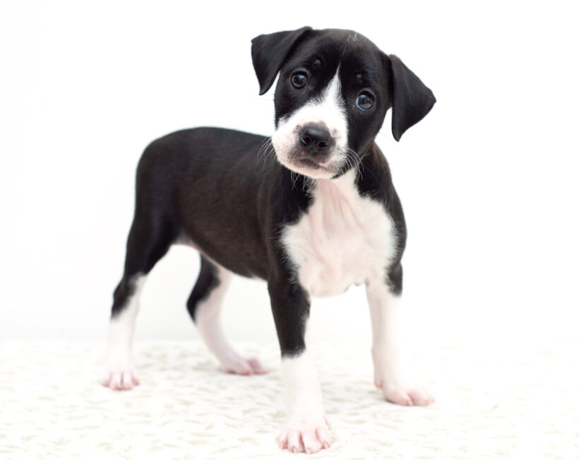 Ohna-Adopted!