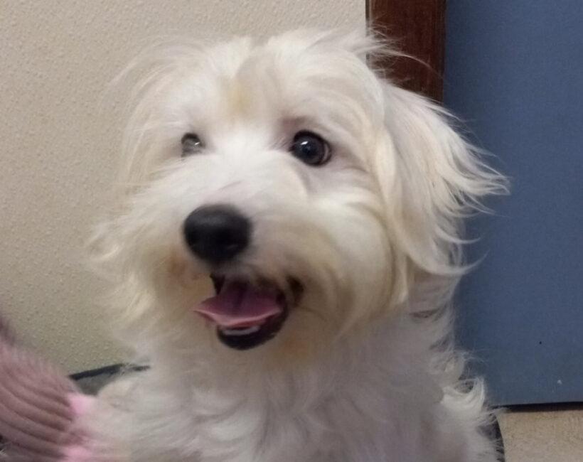 Olaf-Adopted!