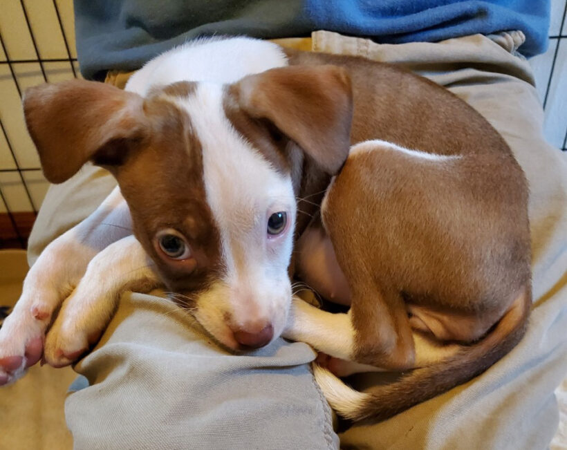 Omni-Adopted!