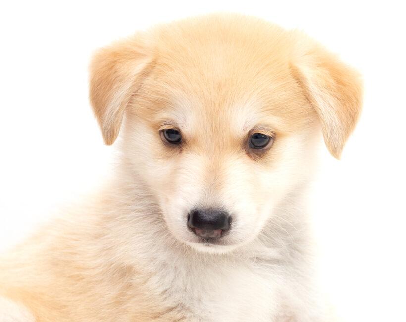 Rico-Adopted!