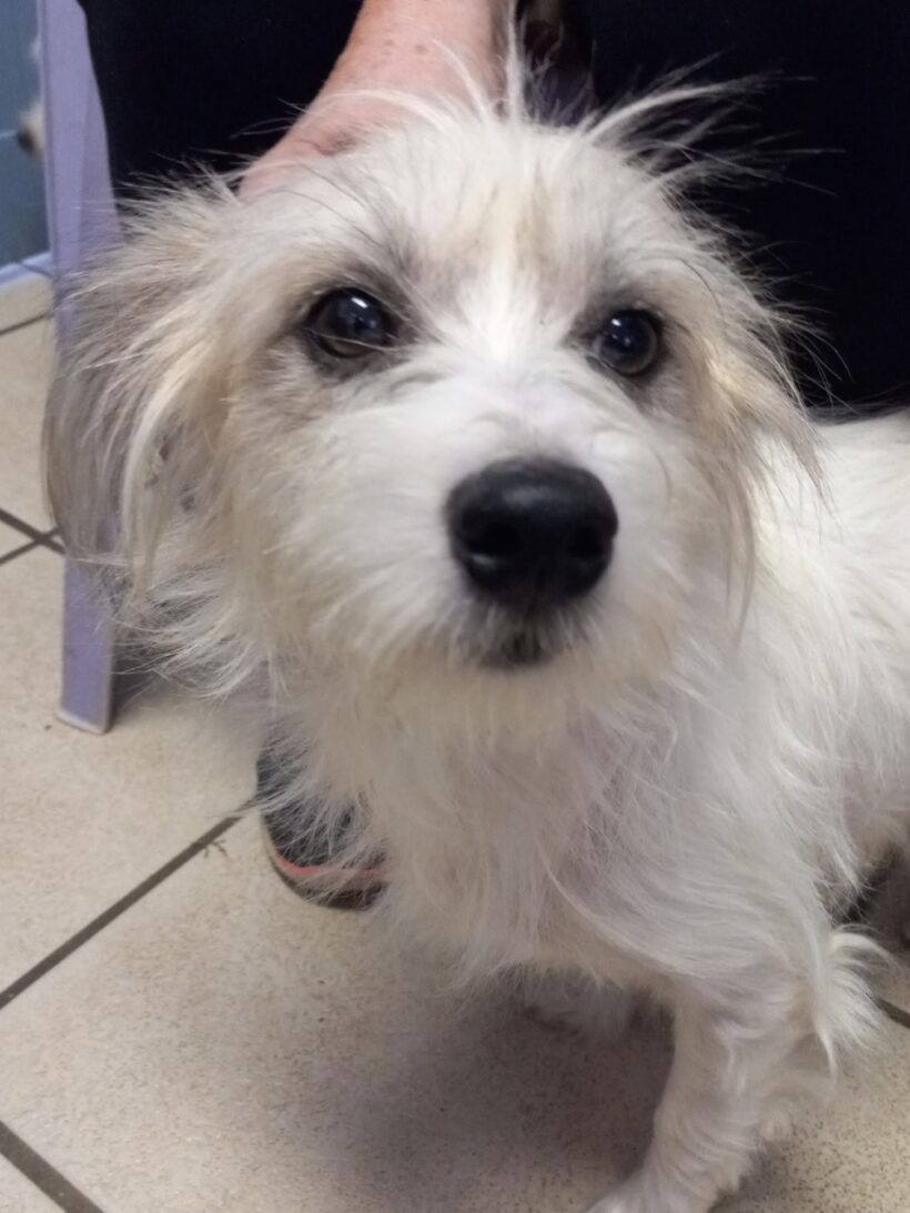Teddy-Adopted!