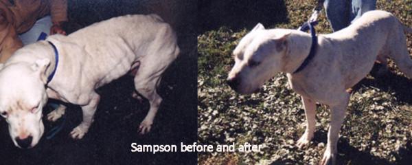 Sampson: A Lasting Legacy
