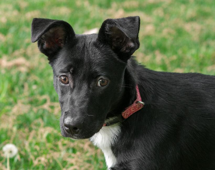 Ebony-Adopted!