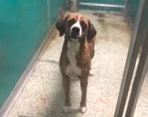Bentley – Adopted!