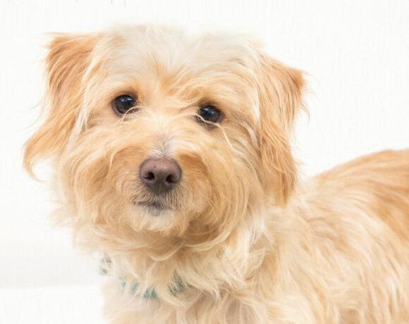 Dawson – Adopted!