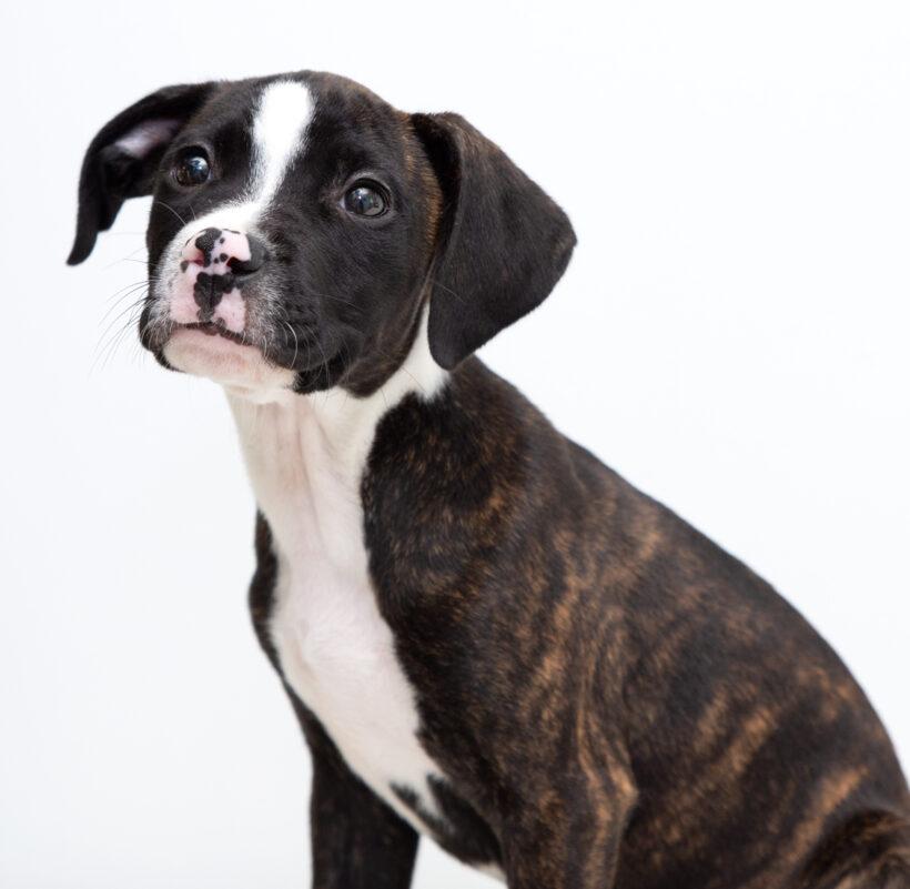 Meri-Adopted!
