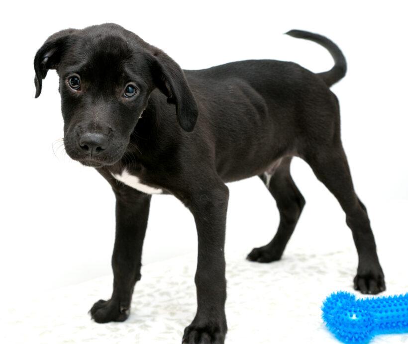 Micah-Adopted!