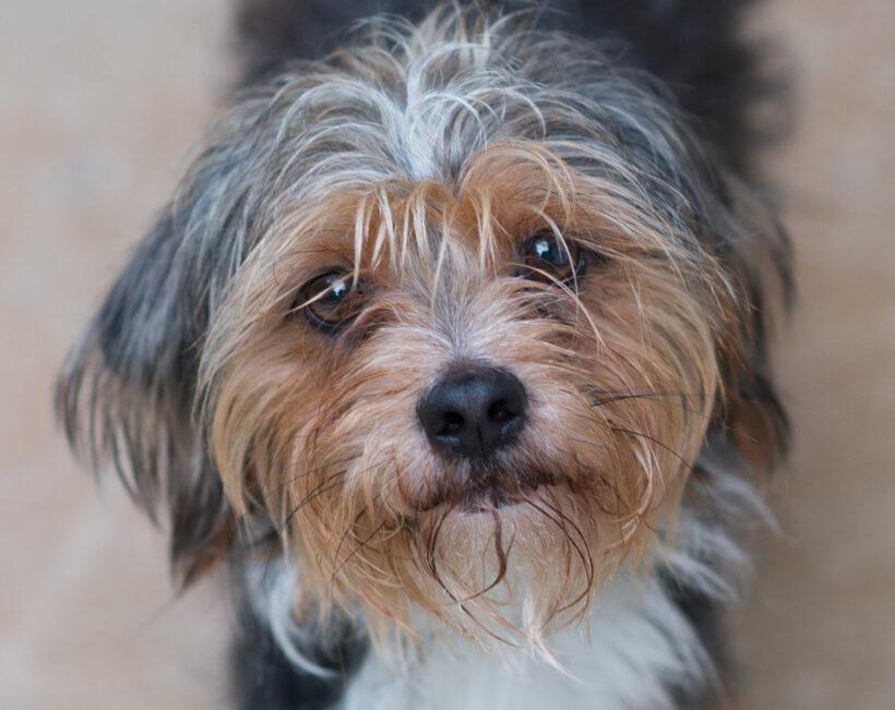 Otis-Adopted!