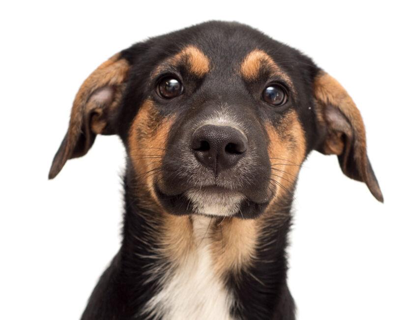 Paisley-Adopted!